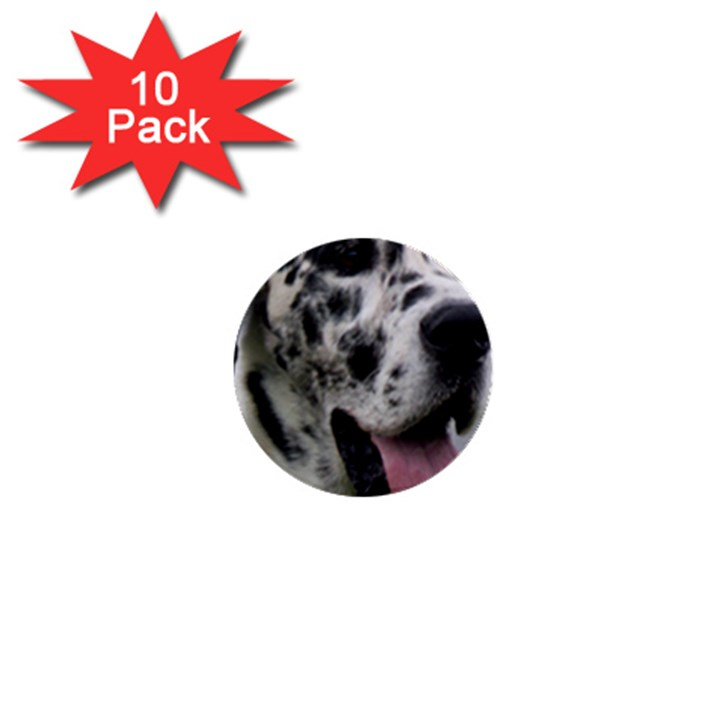 Great Dane harlequin  1  Mini Buttons (10 pack)