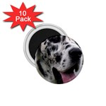 Great Dane harlequin  1.75  Magnets (10 pack)  Front