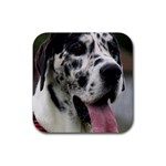 Great Dane harlequin  Rubber Coaster (Square)  Front