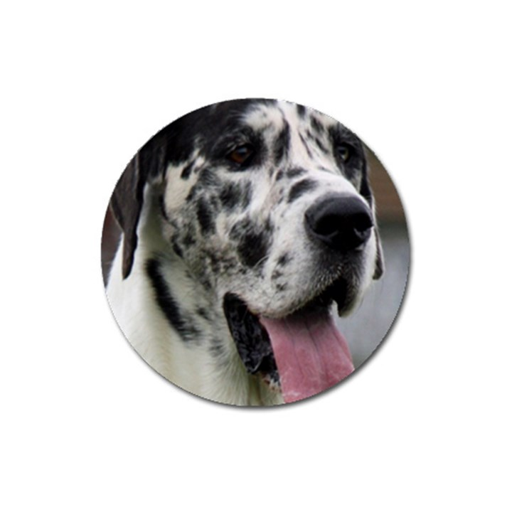 Great Dane harlequin  Magnet 3  (Round)