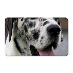 Great Dane harlequin  Magnet (Rectangular)