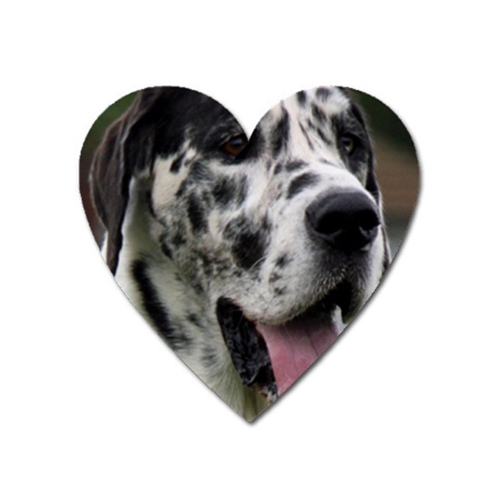 Great Dane harlequin  Heart Magnet