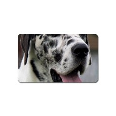 Great Dane harlequin  Magnet (Name Card)