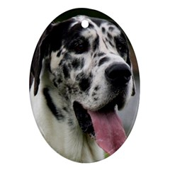 Great Dane harlequin  Oval Ornament (Two Sides)