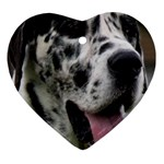 Great Dane harlequin  Heart Ornament (2 Sides) Back