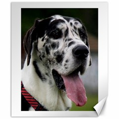Great Dane harlequin  Canvas 8  x 10