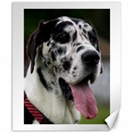 Great Dane harlequin  Canvas 8  x 10  10.02 x8 Canvas - 1