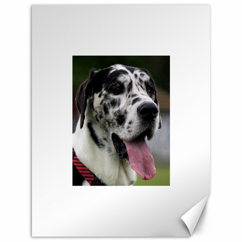 Great Dane harlequin  Canvas 12  x 16