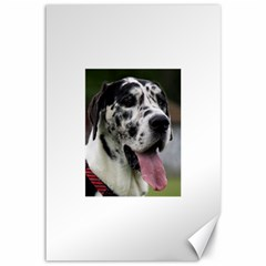 Great Dane harlequin  Canvas 12  x 18