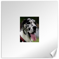Great Dane harlequin  Canvas 20  x 20