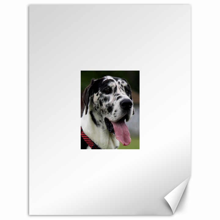 Great Dane harlequin  Canvas 18  x 24