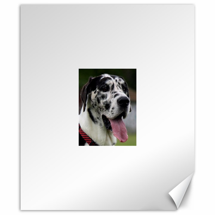 Great Dane harlequin  Canvas 20  x 24