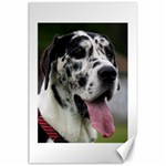 Great Dane harlequin  Canvas 24  x 36  36 x24 Canvas - 1