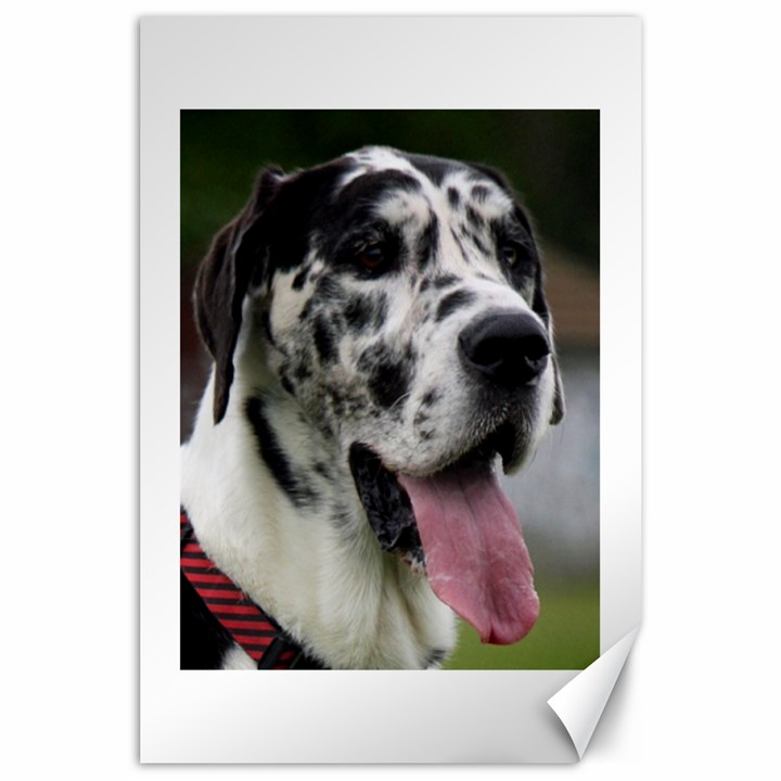 Great Dane harlequin  Canvas 24  x 36