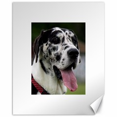 Great Dane harlequin  Canvas 11  x 14