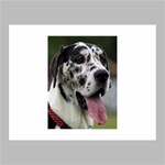 Great Dane harlequin  Canvas 14  x 11  14  x 11  x 0.875  Stretched Canvas
