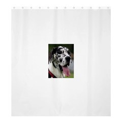 Great Dane harlequin  Shower Curtain 66  x 72  (Large)
