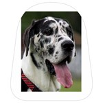 Great Dane harlequin  School Bags (Small)  Front