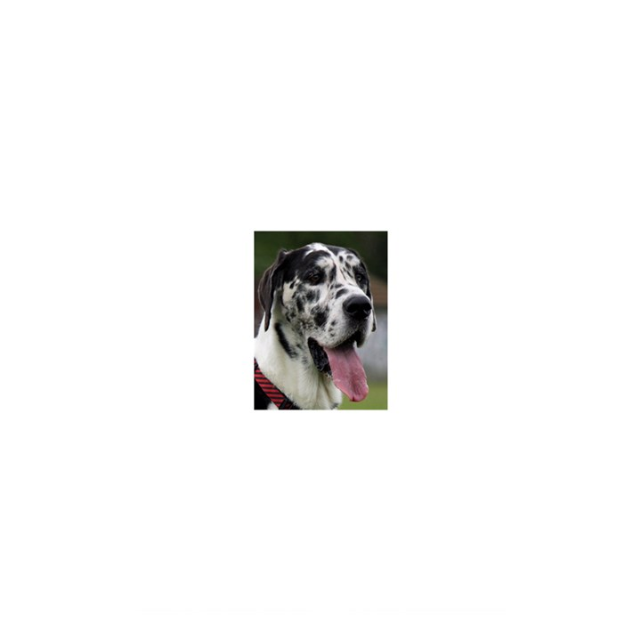 Great Dane harlequin  Shower Curtain 48  x 72  (Small)
