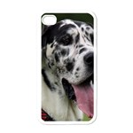 Great Dane harlequin  Apple iPhone 4 Case (White) Front