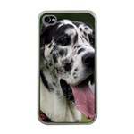 Great Dane harlequin  Apple iPhone 4 Case (Clear) Front