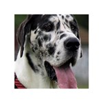 Great Dane harlequin  BOY 3D Greeting Card (7x5) Back