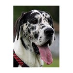 Great Dane harlequin  Twin Hearts 3D Greeting Card (8x4) Inside