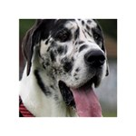 Great Dane harlequin  Circle Bottom 3D Greeting Card (7x5) Back