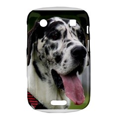 Great Dane harlequin  Bold Touch 9900 9930