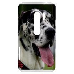 Great Dane harlequin  HTC Evo 3D Hardshell Case