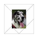 Great Dane harlequin  Acrylic Tangram Puzzle (6  x 6 ) Front