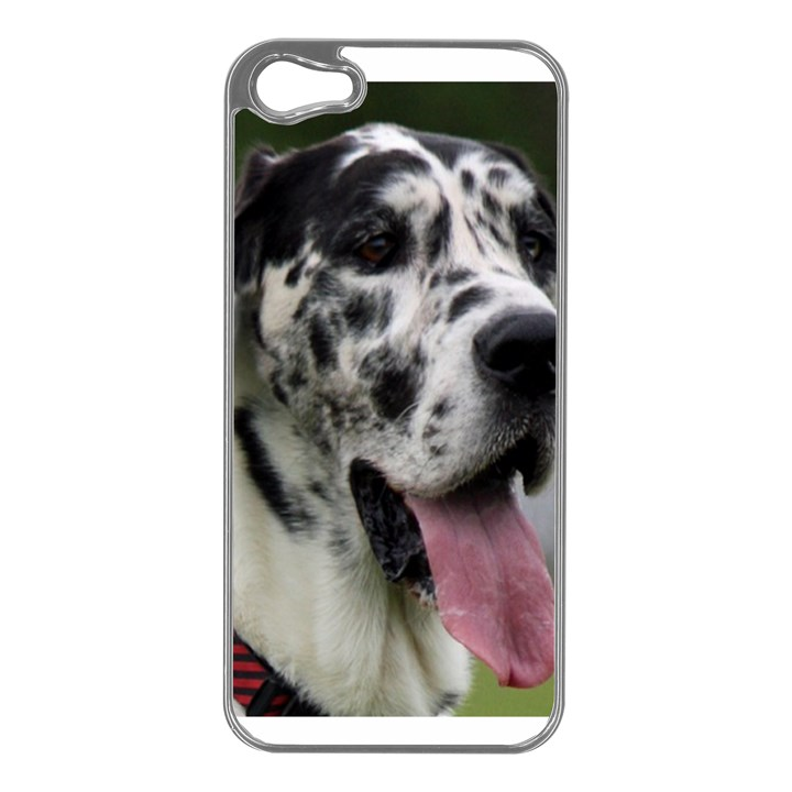 Great Dane harlequin  Apple iPhone 5 Case (Silver)