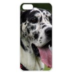 Great Dane harlequin  Apple iPhone 5 Seamless Case (White) Front