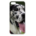 Great Dane harlequin  Apple Seamless iPhone 5 Case (Clear) Front