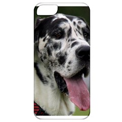 Great Dane Harlequin  Apple Iphone 5 Classic Hardshell Case