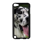 Great Dane harlequin  Apple iPod Touch 5 Case (Black) Front