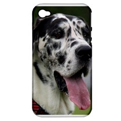 Great Dane Harlequin  Apple Iphone 4/4s Hardshell Case (pc+silicone)