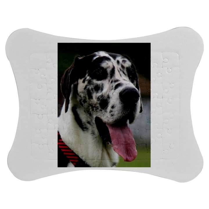 Great Dane harlequin  Jigsaw Puzzle Photo Stand (Bow)