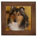 Shetland Sheepdog Framed Tiles Front