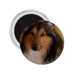 Shetland Sheepdog 2.25  Magnets