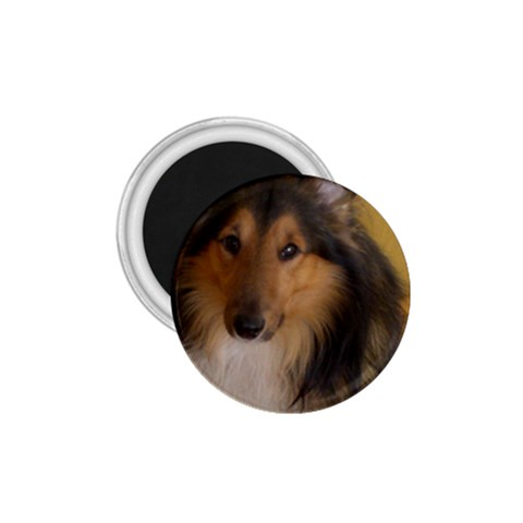 Shetland Sheepdog 1.75  Magnets