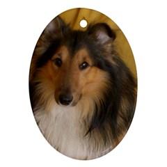 Shetland Sheepdog Ornament (Oval)