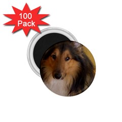 Shetland Sheepdog 1.75  Magnets (100 pack)