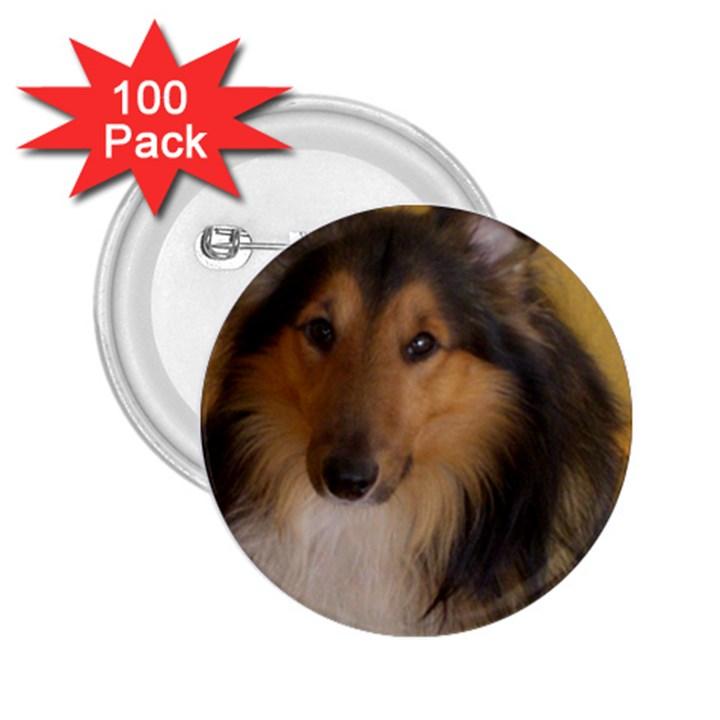 Shetland Sheepdog 2.25  Buttons (100 pack)