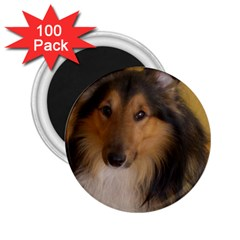Shetland Sheepdog 2.25  Magnets (100 pack)
