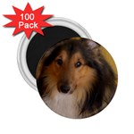 Shetland Sheepdog 2.25  Magnets (100 pack)  Front
