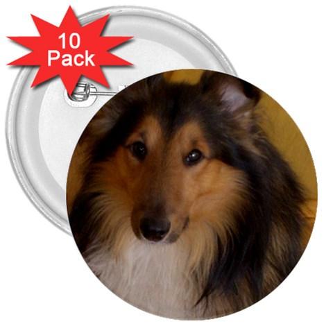 Shetland Sheepdog 3  Buttons (10 pack)