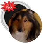 Shetland Sheepdog 3  Magnets (10 pack)  Front