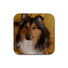Shetland Sheepdog Rubber Square Coaster (4 Pack)