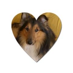 Shetland Sheepdog Heart Magnet